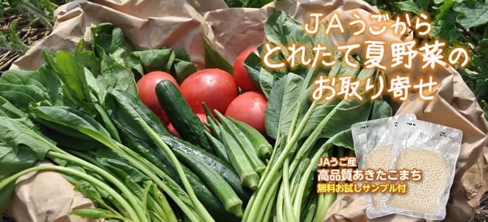 とれたて野菜セット.jpg