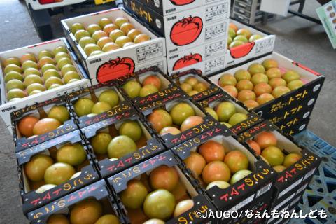 トマト1kg新箱20160815 008.jpg