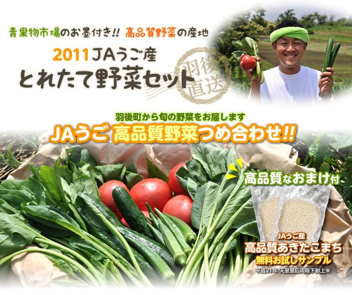 野菜セット2011画像.jpg