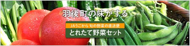 item_yasaiset.jpg
