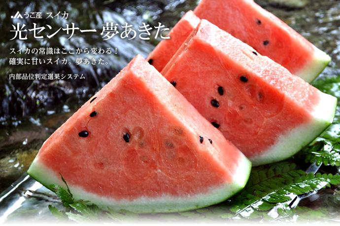 yumeakita_cut.jpg