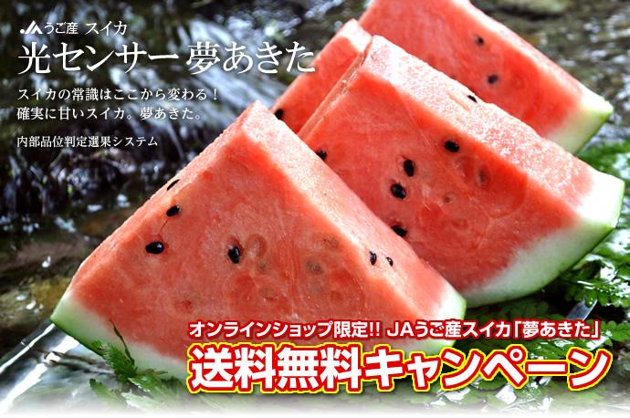yumeakita_cut2.jpg